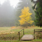 nebliger Herbst thumbnail