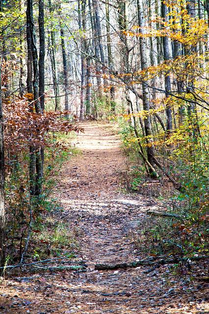 Charles C. Deam Wilderness Area - Grubb Ridge Trail - November 1, 1015