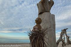 Found big bird (Rod Richardson) Tags: beach clouds longisland driftwood