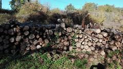 2016-12-09_01-46-35 (busylvie) Tags: nature bois coupe bord du chemin