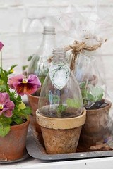 Diy : Mini Greenhouses from Plastic Bottles (irecyclart) Tags: bottle greenhouse recycled repurposed urbangardening