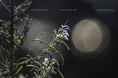 Natural (Carme MV Photography) Tags: bosque otoño diciembre vida bokeh enfoqueselectivo luz contraluz fotodng dzoom