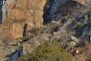 Cerf devant chez lui (Patrice Baud) Tags: hirsch cerf élaphe cervus cerdagne montagne pyrénées nikon wild wildlife mammifère herbivore cérvol deer ciervo cervo f4 nikond7100 nikkor300f4 reddeer