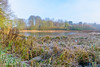 Fairy Lake Ickworth Park-3751 (johnboy!) Tags: ickworthpark ickworthhouse ickworth deadtrees nationaltrust