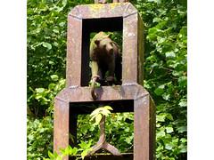 Bernhard Luginbühls Garten (krinkel) Tags: stahl eisen steel iron luginbühl sculpture switzerland bär bildhauer sculptor bear