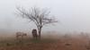 7C2B7294 (Liaqat Ali Vance) Tags: fog fogy weather animals nature lahore google liaqat ali vance photography winter punjab pakistan