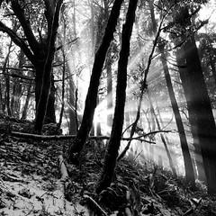 (Gary Sharp) Tags: sunrays blackeysxffilm lowylens hipstamatic sun winter snow iphone oregon humbugmountain monochrome bw hipstography