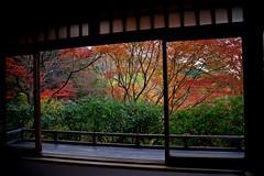 Autumn Window (tez-guitar) Tags: temple kyoto autumn autum 紅葉 autumn leaves architect window tree trees maple wood forest pentax pentaxart
