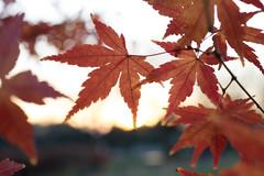 PC105668.jpg (plasticskin2001) Tags: leaf