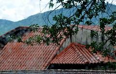 cheiro de chuva... amo! (Ruby Ferreira ®) Tags: rain branches roofs chuvaaocairdodia