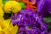 Flowers 3 (Stuart Jones - hope you like what you see.) Tags: flower flowers colour petals macro closeup green purple orange red pink tulip gerbera