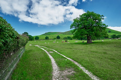 once on a clear day (scottprice16) Tags: england yorkshire boltonabbey dukeofdevonshire estate countryside landscape trees cows sheep wildlife summer field path wall curve cottage waterfall bardenmoor fujixpro1 1024mmf4