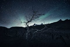Patagonia - Burned Forest (Mikko Lagerstedt) Tags: patagonia photography mikkolagerstedt fineart burned forest details unique atmosphere sky southern lights southernlights chile south america mountains