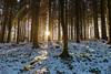 Sonnenuntergang im Winterwald I (JBsLightAndShadow) Tags: heidelberg nikon nikond750 d750 tamron tamronsp2470mmf28divcusd winter winter2017 schnee snow wald odenwald forest baum tree bäume trees gaisberg sonne sonnenschein sun sonnig sunny sunshine sunset sonnenuntergang licht sonnenlicht
