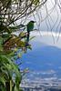 CostaRica04 (PuraVida Photo) Tags: motmot costarica birds puravida santabárbara heredia wildlife