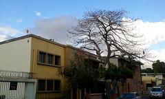 Barrio Amón: viviendas de una temprana modernidad av.11, c.3a-7/ Barrio Amón: houses of an early modernity 11th av., 3a-7th st. (vantcj1) Tags: árbol cielo nubes calle vehículos moderno patrimonio déco vivienda vegetación urbano