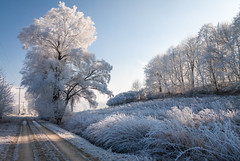 IMG_7260 (karsten.bretschneider) Tags: winter germany bavaria trees raureif deutschland bayern cold kalt