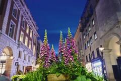 Covent Garden flowers (silent.pixels) Tags: london coventgarden flowers dof nikon d600 50mm