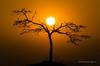 Sunset (Esmaeel Bagherian) Tags: sunset sun tree tamron tamron150600 esmaeelbagherian landscape iran irannature d7000 nikon nikond7000 غروب خورشید درخت ضدنور منظره چشمانداز تکدرخت silhouette ایران اسماعیلباقریان