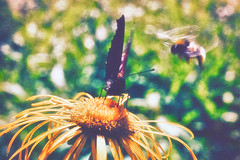 maya the bee & friend (Marko Rautavesi) Tags: tectures bee butterfly