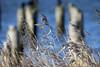 Swaying in the Winter_5027 (Mike Head - Jetwashphotos) Tags: grass grassstalks swaying standingtall winter boundarybay southdelta delta bc britishcolumbia canada westerncanada westernregion