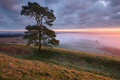 Martinsell Hill, Wiltshire (Stu Meech) Tags: martinsell hill wiltshire marlborough sunrise fog mist scott pine tree nikon leefilters stu meech
