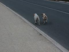 abanonadas (jesust793) Tags: perros dogs abandono amistad compañia