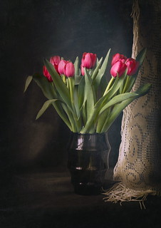 Tulips and Lace Curtain 2
