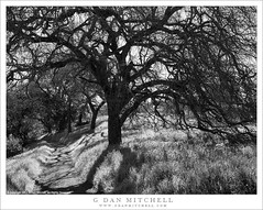 Oaks, Trail, Spring (G Dan Mitchell) Tags: calero santaclara country park hills grass spring season silhouette oak tree trail shadows landscape nature blackandwhite monochrome