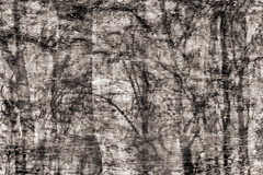 Puddles (Multiple Exposure) 92 (pni) Tags: monochrome tree reflection ice water puddle multiexposure multipleexposure tripleexposure lapinlahti lappviken helsinki helsingfors finland suomi pekkanikrus skrubu pni