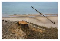 Coastal protection (bavare51) Tags: usedom zempin küste ostsee baumstumpf buhne strand natur