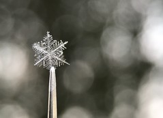 Snowflake on metal (jilllian2) Tags: nature ice frozen realsnowflake winter macro needle snowflake metal macromondays iphone7plus olloclip