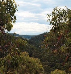 Valley Views (yewenyi) Tags: park nature digital forest geotagged nationalpark view natural sydney australia valley nsw newsouthwales aus stives kuringgai pc2075 oceania auspctagged kuringgaichasenationalpark pctagged greatersydney geo:lat=3370359 geo:lon=151176209 wildflowergarden