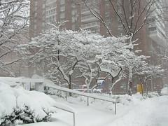 NYC Blizzard 02.12.06 10.41 DSCN1001 (PabsV) Tags: park nyc snow newyork tree geotagged harlem columbia columbiauniversity blizzard morningside geolat40812165822562 geolon7395880482046067