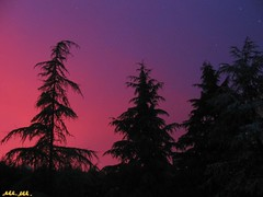 Tamening Nature_a Cure (Master Mason) Tags: trees sunset sky italy color tree home nature colors alberi contrast forest garden casa italia tramonto dusk balcony natura cielo thecure frommywindow albero cure luce balcone romagna forlì contrasto aforest sbtxt