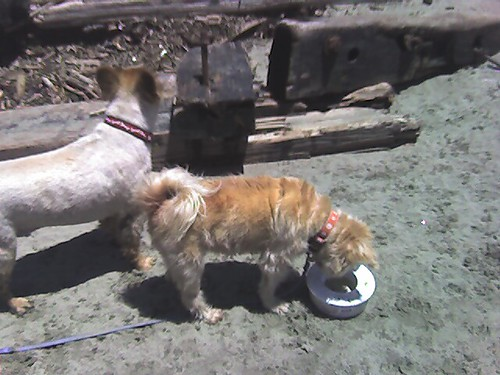 Jabari and Phoenix made good use of the portable water trough