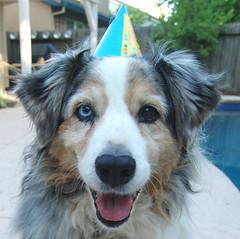 Sage (CathieV) Tags: birthday dog sage