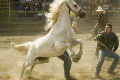 Wild Horse Race (housden photos) Tags: wild horse lake race cowboy williams country western rodeo cowgirl stampede mireasrealm