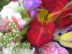aafse boeketten #4 (Michiel Thomas) Tags: flowers flower fleur fleurs blumen bouquet fiori blume fiore bloemen bouquets strauss bloem boeket blumenstrauss flowerphotography flowerphotographer rosephotography bloemenfotograaf photographedefleurs blumenfotograf michielthomasflowerphotography