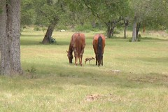 Horse and faun (essexjan) Tags: horse faun