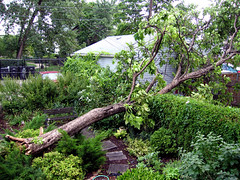 If A Tree Falls in Your Backyard... (visioncity) Tags: storm tree fun cool crash fell mangled powerout wasniowski visioncity