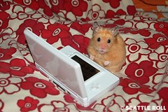 """Don't talk to me right now!"" *Kumanoko* (Seattle Roll) Tags: pet pets animal animals d50 golden nikon nintendo ds hamster hamsters syrian dslite"