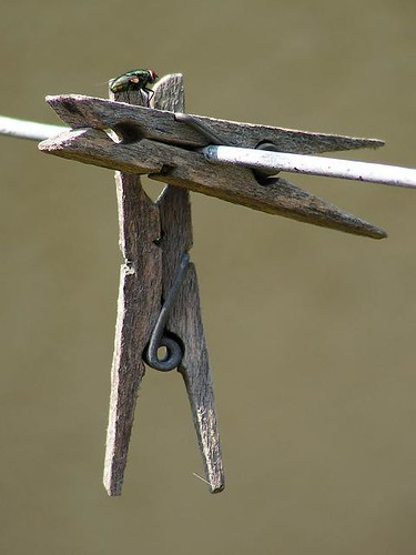 A fly swinging on clothespins