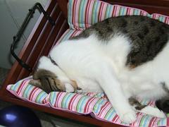 He loves his bed (Annejelynn) Tags: cats cat chats furry kitten feline chat fuzzy kitty kittens gatos gato kitties felines katze kittycats