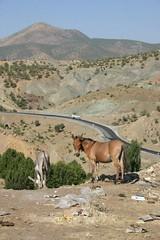 Donkey and horse near Bitlis, Turkey. (Nicolai Bangsgaard) Tags: turkey favourites wt 26jul06