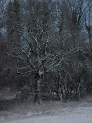 Winter at Taraloka
