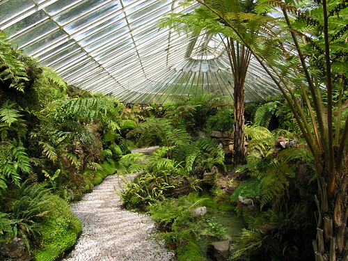 Inside the fernery at Ascog Hall by mzehrer