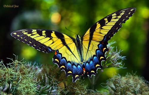 اجمل ما خلق الله تعالى 207225072_e8288b6ac6
