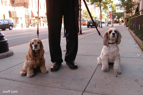 Walking the dogs on Wells Street (October 2003.)