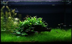 Aquarium (byronjyu) Tags: plants fish aquarium yu byron takashi amano aquascape i500 interestingness352